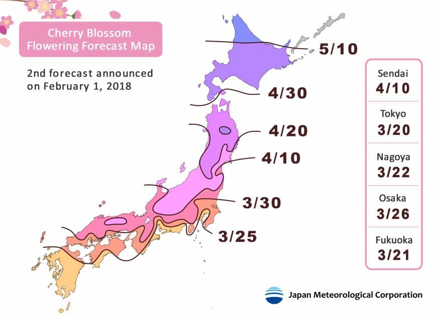 El sakura florecerá más temprano en Japón - XiahPop