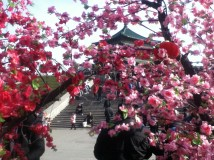 The bell tower through some blossoms
