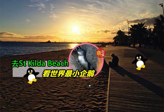 【免费看企鹅】就在St Kilda Beach!靠近City + 交通方便
