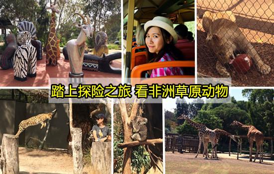 【墨尔本最大动物园】踏入非洲草原看野生动物,还有袋鼠、树熊等,就在Werribee Open Range Zoo!