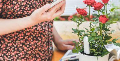 cuidar plantas aparato xiaomi
