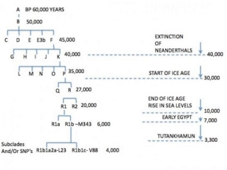 Y-ADN Ierarhia