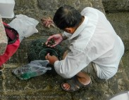 Man in white shirt is sorting through a net of snails, with a few starfish beside him.