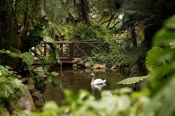 Hotel Puente Romano - Jardines