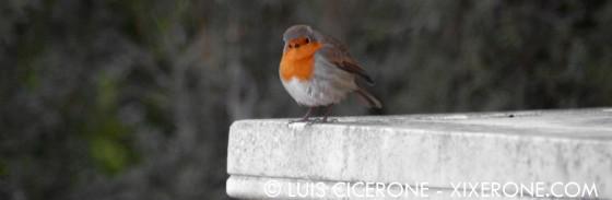 Laberinto_de_Horta