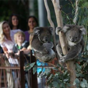 Qué ver en Melbourne - Melbourne Zoo