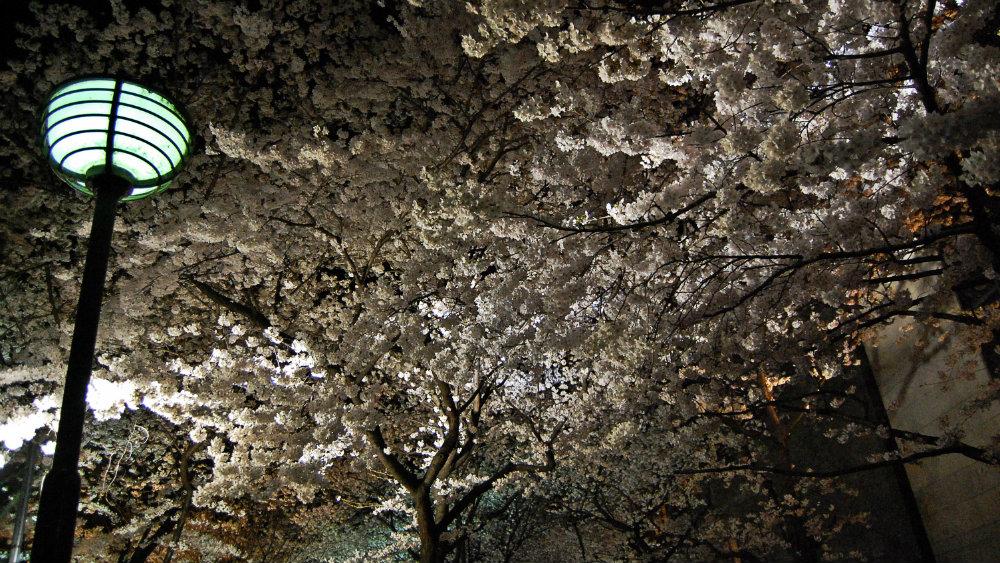 Festival de Hanumi en el Paseo del filósofo