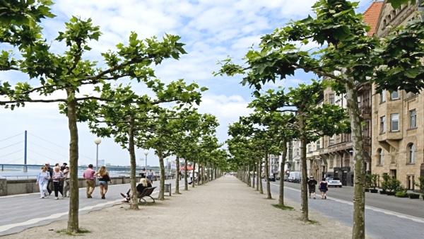 Dónde dormir en Düsseldorf, Alemania – Dusseltal