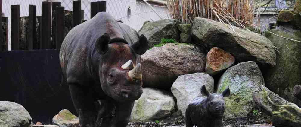 Cosas para ver en Rotterdam - Zoo de Róterdam