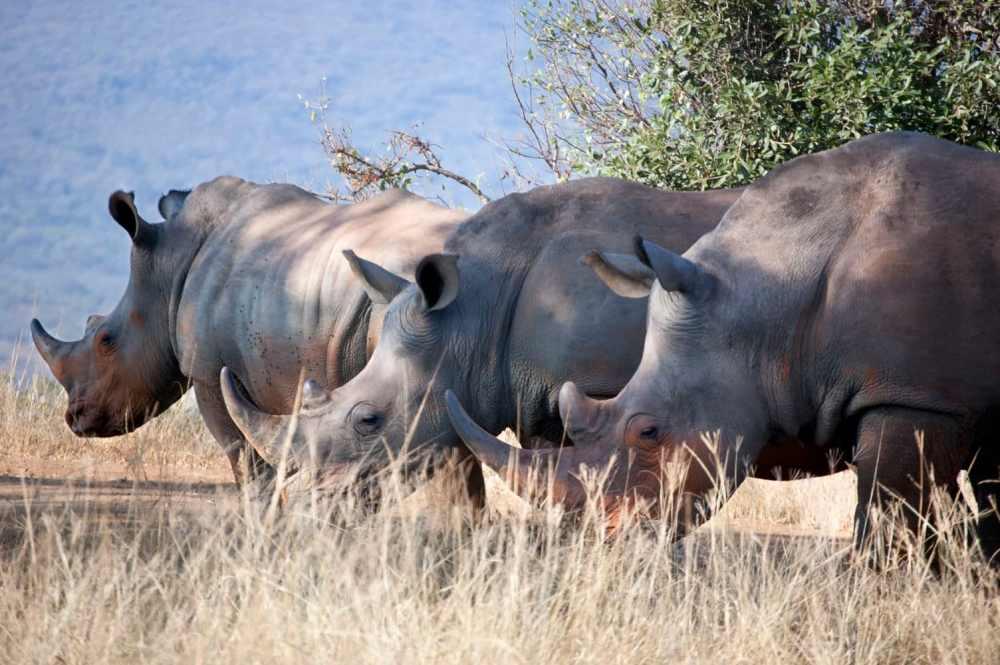 Qué ver en Sudáfrica - Las cinco grandes especies animales de África