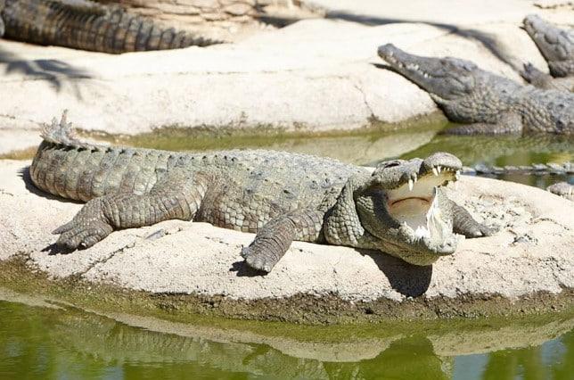 Atracciones de Torremolinos - Parque de los cocodrilos
