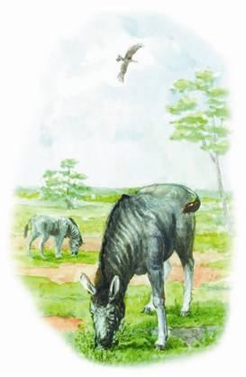 Вымершие животные планеты Земля где обитала квагга
