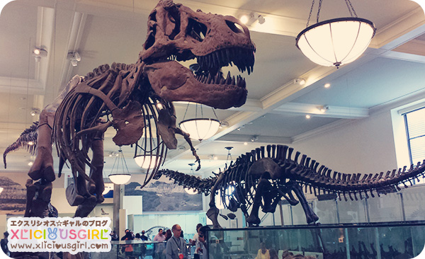 new york american natural history museum dinosars