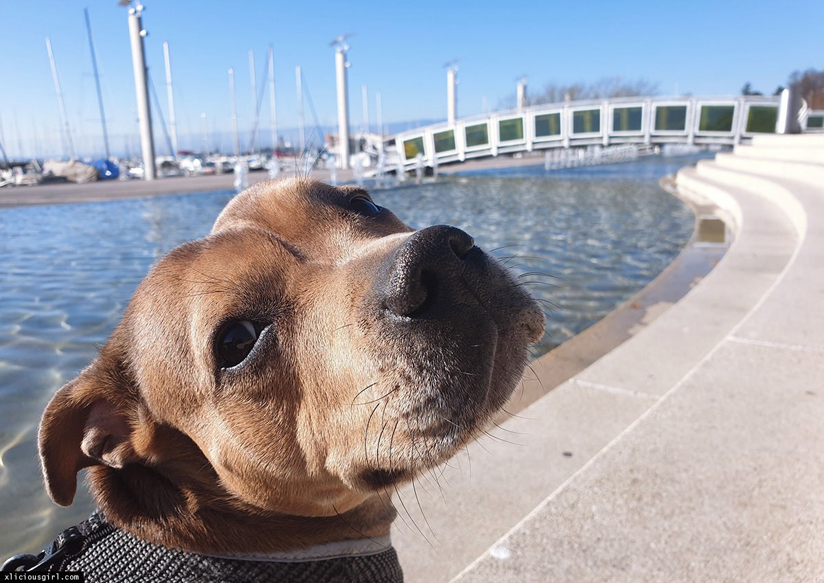 brown dog by the water