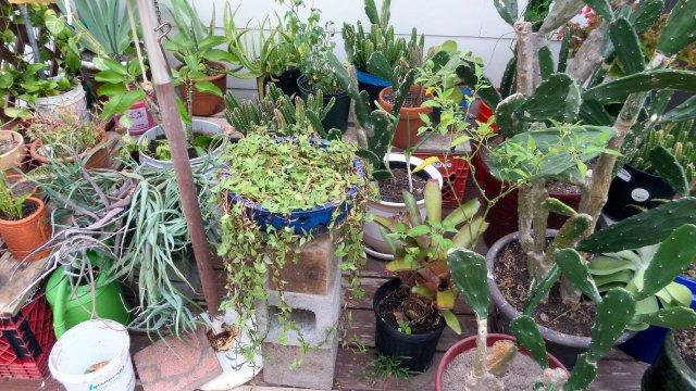 garden16-3