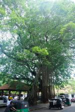 Sri Lanka 20150805 083904