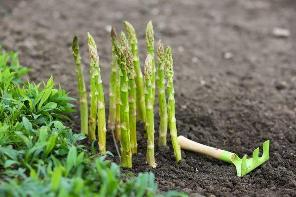 6 мифов об органическом земледелии, которые перевернут ваше представление о нем