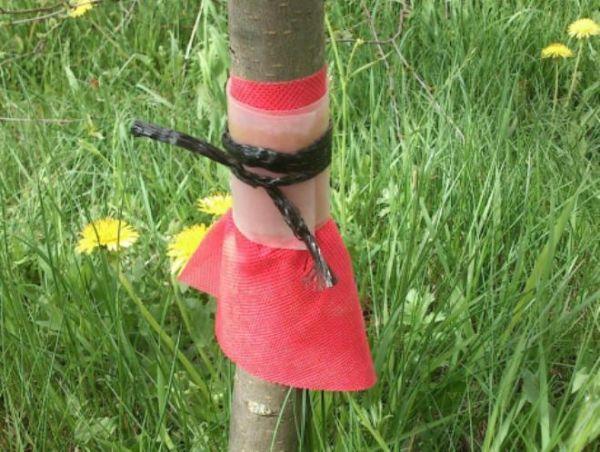 Ловчий пояс для деревьев своими руками