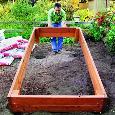 Посадка растений в короб-парник, сделанный своими руками
