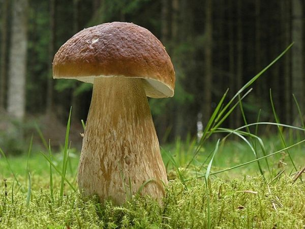 Выращивание до 30 видов грибов на приусадебном участке