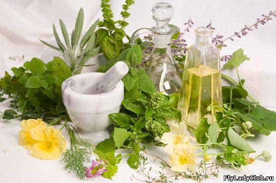 Как правильно заготавливать лекарственные травы