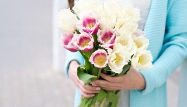 Тюльпан на подоконнике к 8 марта