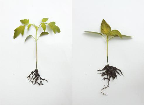 Огород: сезонные работы в феврале