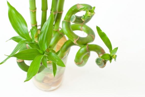Восемь растений, которые хотят жить в вашей ванной комнате