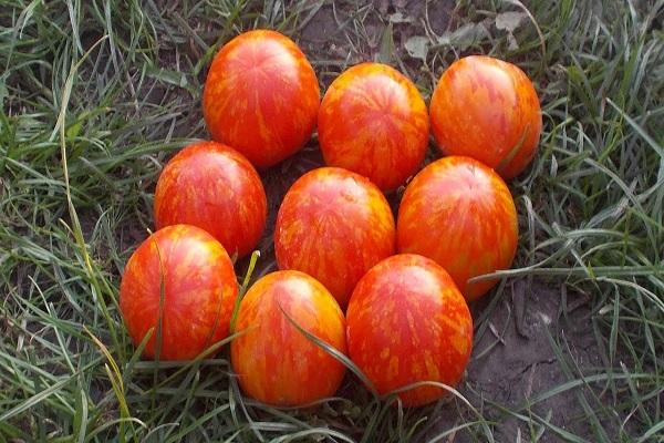 Описание сорта томата Ампельный смесь, особенности выращивания и ухода
