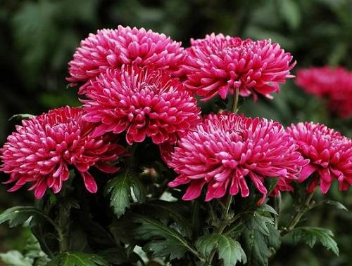 Цветы элегантности или само совершенство