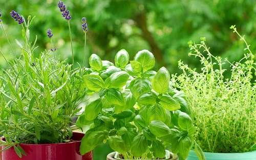 Выращиваем зелень дома