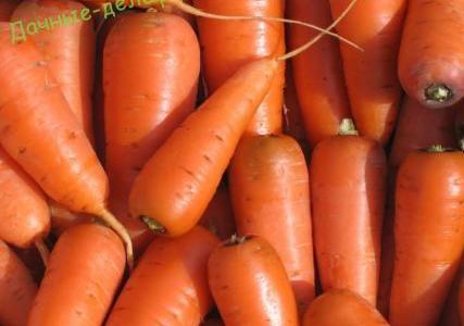 Сорт моркови Оленка подвела 15