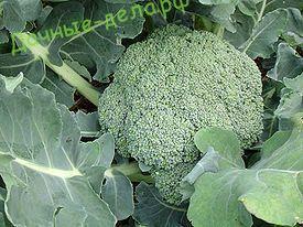 Основные отличия брокколи от цветной капусты 4