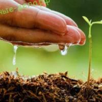 Как правильно сеять семена в кипяток