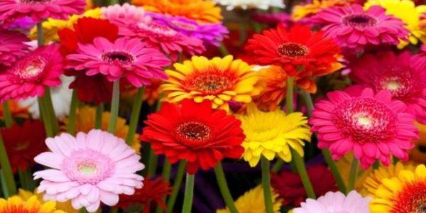 5 неприхотливых растений для идеального палисадника 14