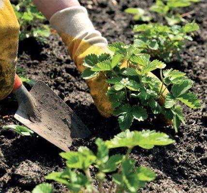 Несколько советов на все случаи огородных забот 5