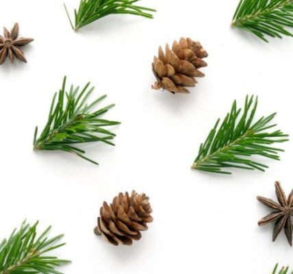 10 веских причин сохранить хвою от новогодней елки 5