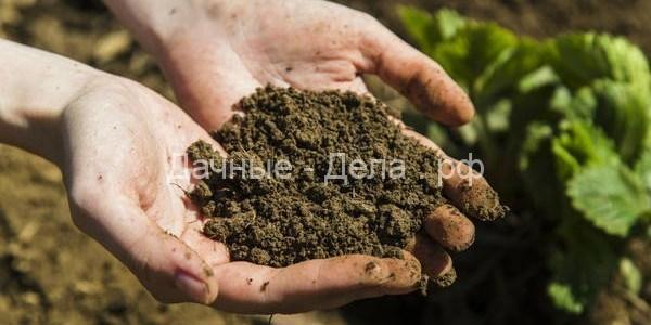 Органические подкормки для растений из подручных средств 9
