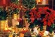 Пуансеттия или цветок Рождественская звезда