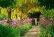 Создать благоухающий сад соими руками совсем не сложно