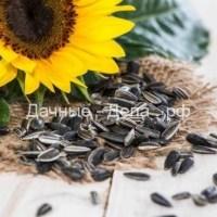 Гибриды семян подсолнечника