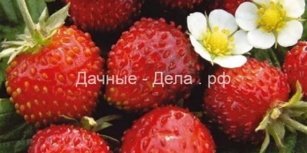 Семена ягод почтой 6
