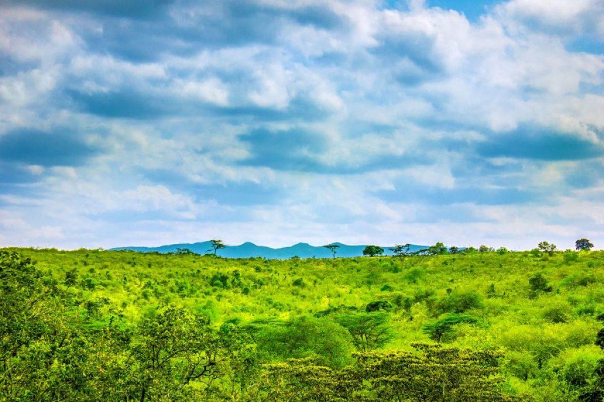 Нгонг-Хиллз, Кения