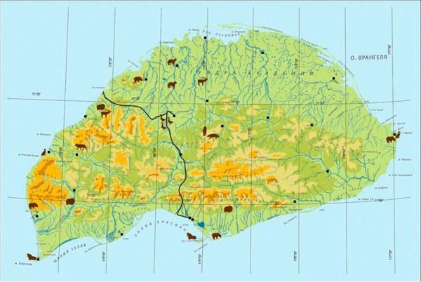 Заповедник Остров Врангеля: животные и растения