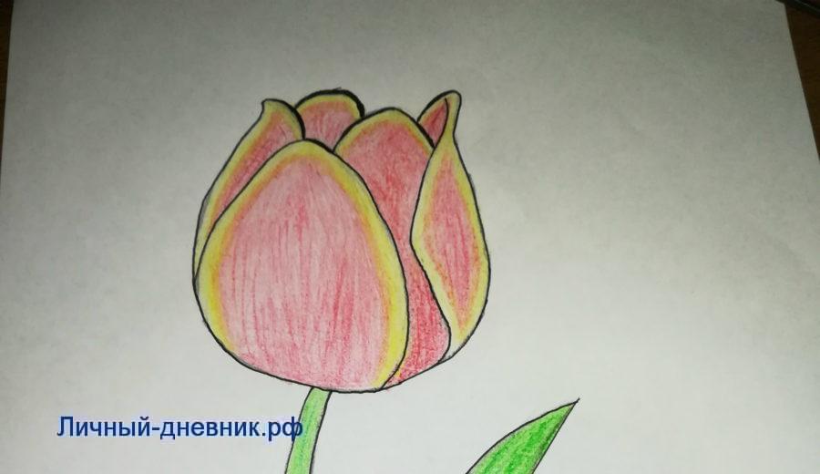 картинки как рисовать тюльпан мак землянику являются лучшими