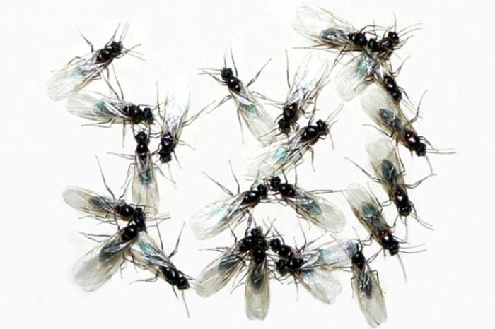 избавиться от мух в квартире
