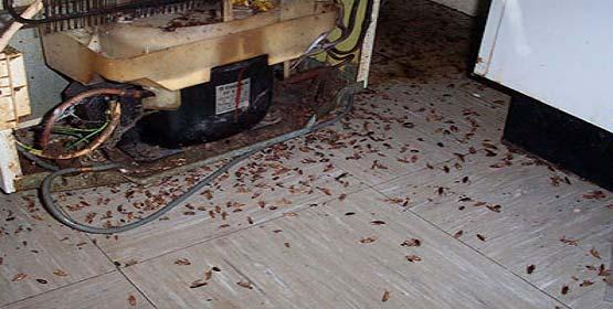 Сколько стоит уничтожение тараканов в Лыткарино