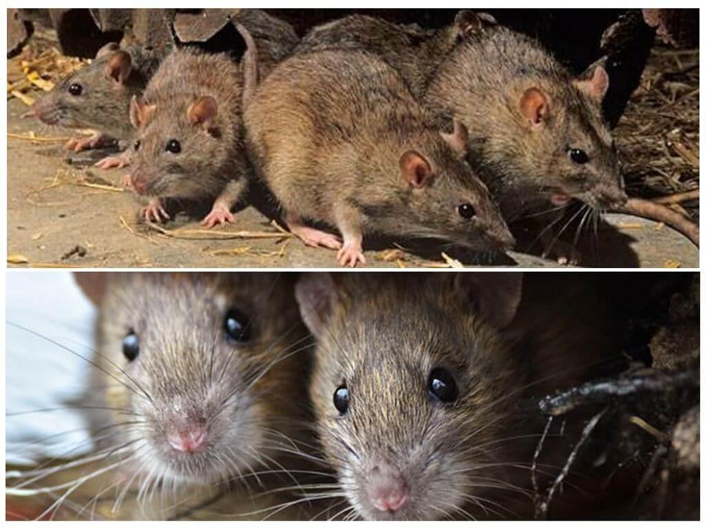 Что едят мыши в природе — От Земли до Неба