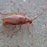 Дезинфекция от тараканов Балашиха