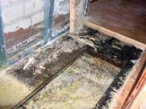 Домовой и древесный гриб в доме, что делать?